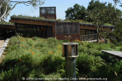 Residential Rooftop Gardens nyiad design articles - greening the skyline
