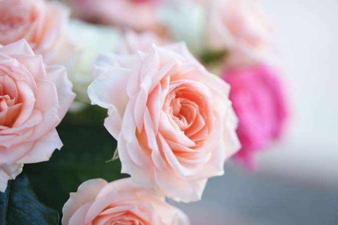 5 Valentine's Day Floral Design Facts