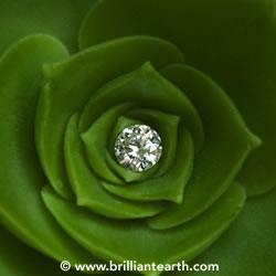 Green Design - Green Weddings